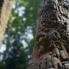 pro_treebark_190809_01