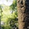 pro_treebark_190809_02