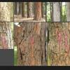 pro_treebark_190809_05